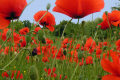 [Top] 999+ hình ảnh bông hoa đẹp rực rỡ chỉ ngắm thôi đã say