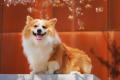 [BST] hình ảnh con chó ngộ nghĩnh, dễ thương nhất