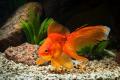 Download 1001 hình ảnh con cá đẹp cho bé yêu khám phá