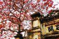 Chiêm ngưỡng 100 hình ảnh mùa thu Hà Nội đẹp, mê hoặc lòng người