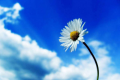 99+ hình nền bầu trời đẹp cho máy tính, nuôi mầm ước mơ, hy vọng