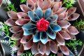 [Cập Nhật] 999+ hình ảnh bó hoa tiền đẹp nhất đầy đủ mệnh giá